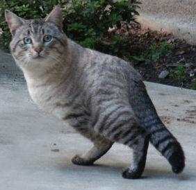 star wars Tauntaun cat
